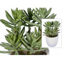 Maceta m12 cactus sedum x 7...