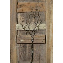 Alquiler Árbol  caduco alambrado 95 cm s/base marrón