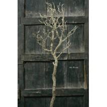Árbol  caduco alambrado  95 cm s/base rústico