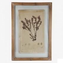 "Cuadro motivo ""árbol de mar"" marco madera natural 40x1,8x58 cm"