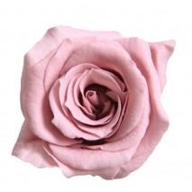 Rosa preservada cabeza d. 2,5 cm princesa flor de cerezo (Cherry Blosson)