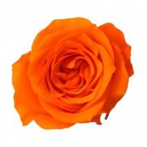 Rosa preservada cabeza d. 2,5 cm princesa naranja