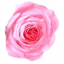 Rosa preservada cabeza d. 2,5 cm princesa rosa nupcial