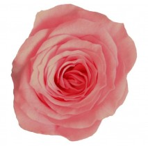 Rosa preservada cabeza d. 2,5 cm princesa rosa vintage
