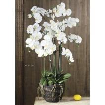 Planta orquidea x 6 vara base natural 97 cm crema