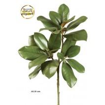 Vara hojas magnolio...