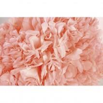 Hortensia preservada sin tallo 14 X 7 cm aproxi. rosa palo