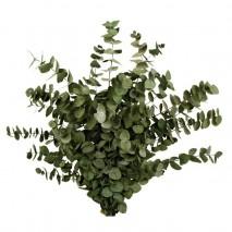 Eucaliptus preservado capi espiral 200 grs verde