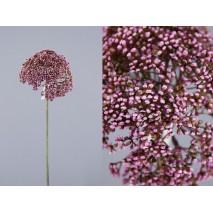 Allium artificial anethum lila