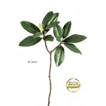 Magnolia 58cm crema