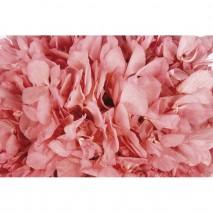 Hortensia preservada sin tallo 14 x 7 cm aprox. rosa malva