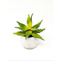 Maceta m10 suculenta tiesto cerámica crema