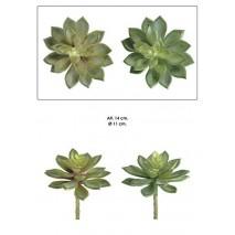 Planta mini echeveria 14cm surtidas