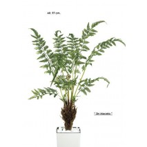 Mata helecho raíces 97 cm verde