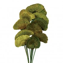 Mush sponge 10 pcs 40cm d 6-8cm verde kaki