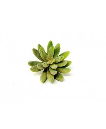 Planta artificial mini d 10cm echeveria plástico Alt 12cm