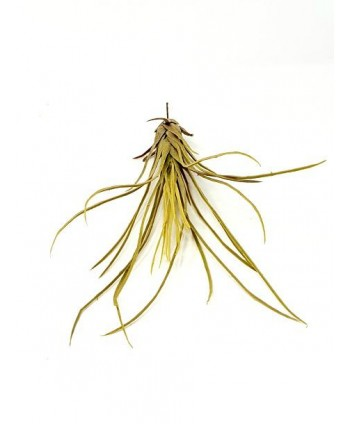 Planta artificial mini d 12cm tillandsia larga plástico Alt 30cm