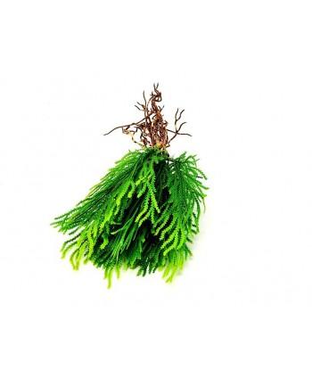 Planta artificial mini d 10cm hierba c/raíces verde plástico Alt 22cm