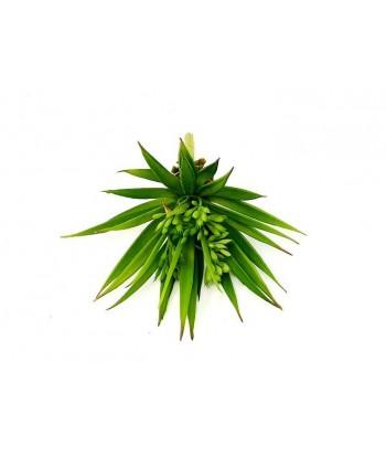 Planta artificial mini d 14cm pita verde plástico Alt 18cm