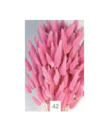 Lagurus seco 80g 60cm rosa malva