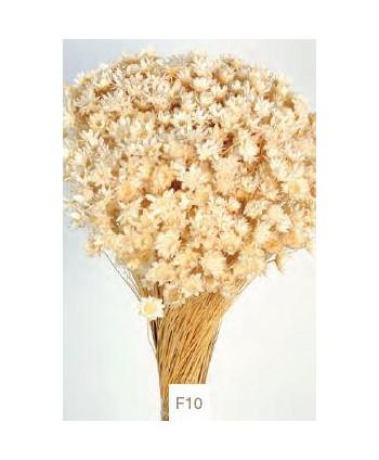 Glixia seca 50gr 50cm amarillo pálido