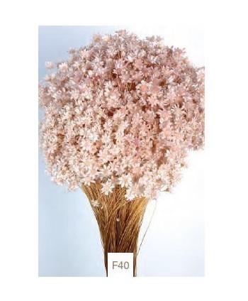 Glixia seca 50gr 50cm rosa pálido
