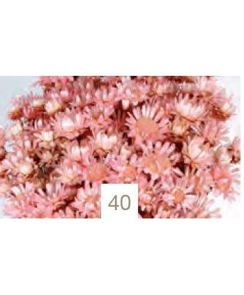 Glixia gigante 50grs  45cm rosa