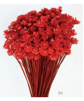 Glixia gigante 50grs  45cm roja