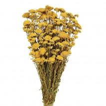 Achillea silvestre seca 150...