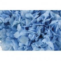 Hortensia preservada sin tallo 14 x 7 cm aprox. azul cielo