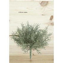 Mata bush grass x 7. 25 cm...