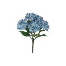 Mata hortensias x  7 f azulina