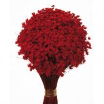 Marcela seca 50g 30cm rojo