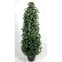 Árbol cono laurel verde con...