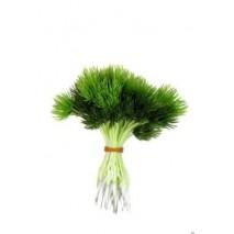 Pick plástico verde pino mini